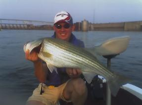 Pickwick fishing guide rockfish stripers bass largemouth for Pickwick fishing report